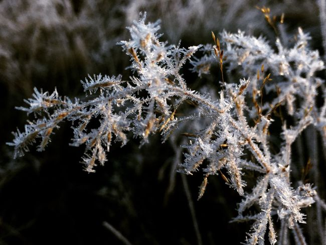 Cold Temperature Frozen Winter Close-up Ice Frost Snowflake Outdoors