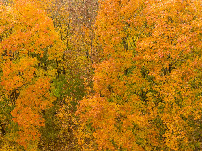 High angle view of yellow flower trees in forest during autumn