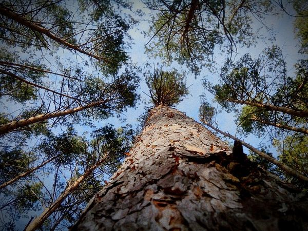 Low Angle View Tree Architecture Built Structure Day Growth Travel Destinations Building Exterior Outdoors Branch No People Sky Ancient Civilization Nature Perspectives On Nature