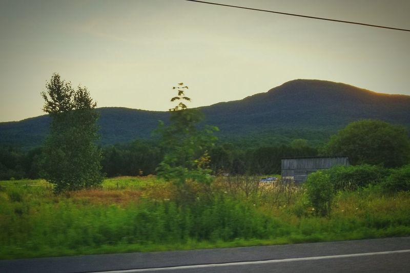 gotta love the state I love ❤ #vt #elmoremountain #summerevenings Tree Rural Scene Mountain Sky Grass Plant