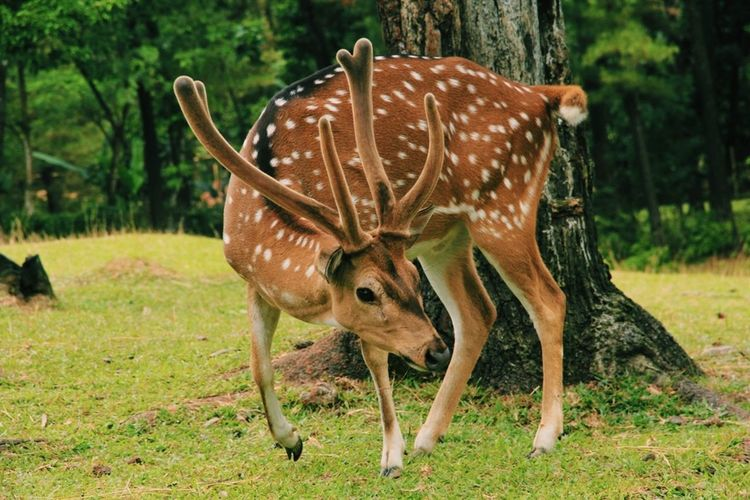 Deer EyeEm Nature Lover INDONESIA