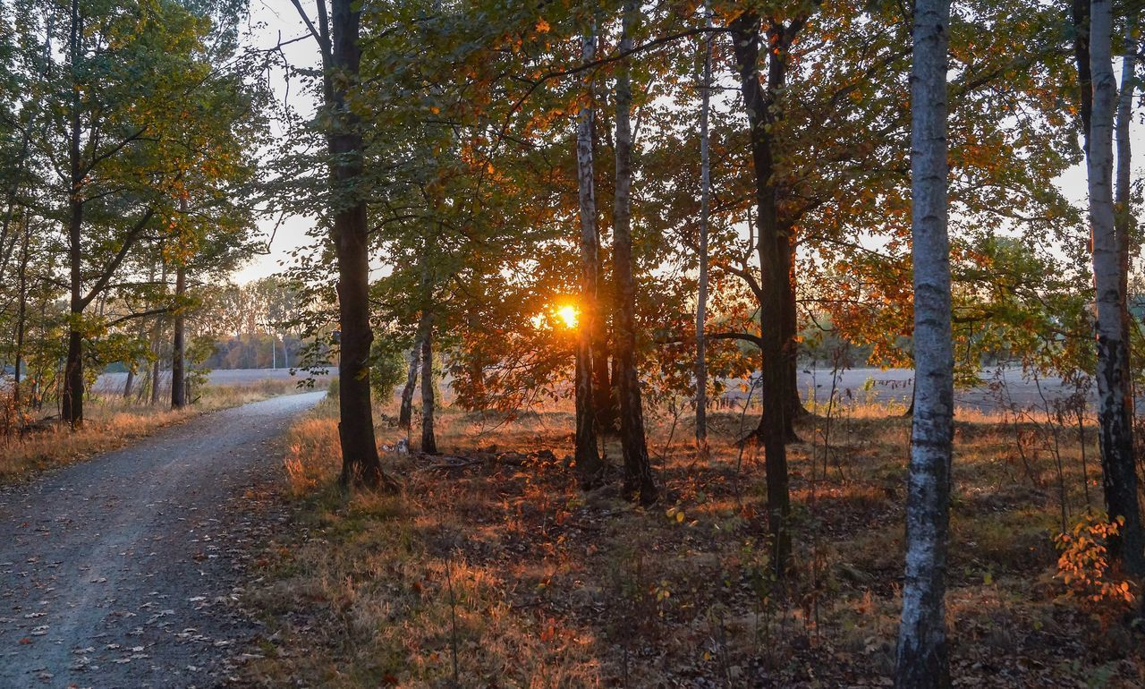 tree, plant, land, forest, sunlight, tranquility, sun, nature, tranquil scene, scenics - nature, non-urban scene, beauty in nature, no people, sunbeam, sky, woodland, landscape, growth, autumn, sunset, outdoors, lens flare, change