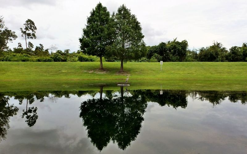 My Backyard Oasis Landscape Pine Trees Tree Line Grass Area Sky And Clouds Animal Bird Grey Heron  Reflection Beauty In Nature Vivid Photography