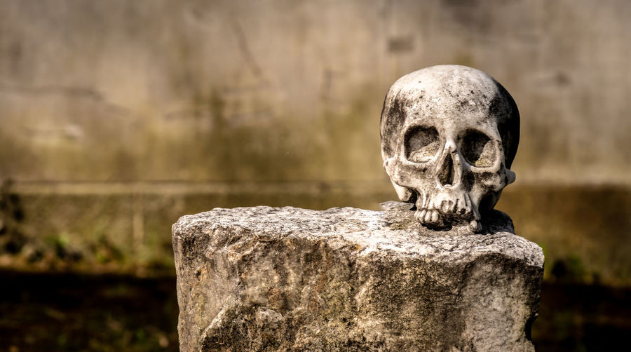 Close-up of old human skull on rock