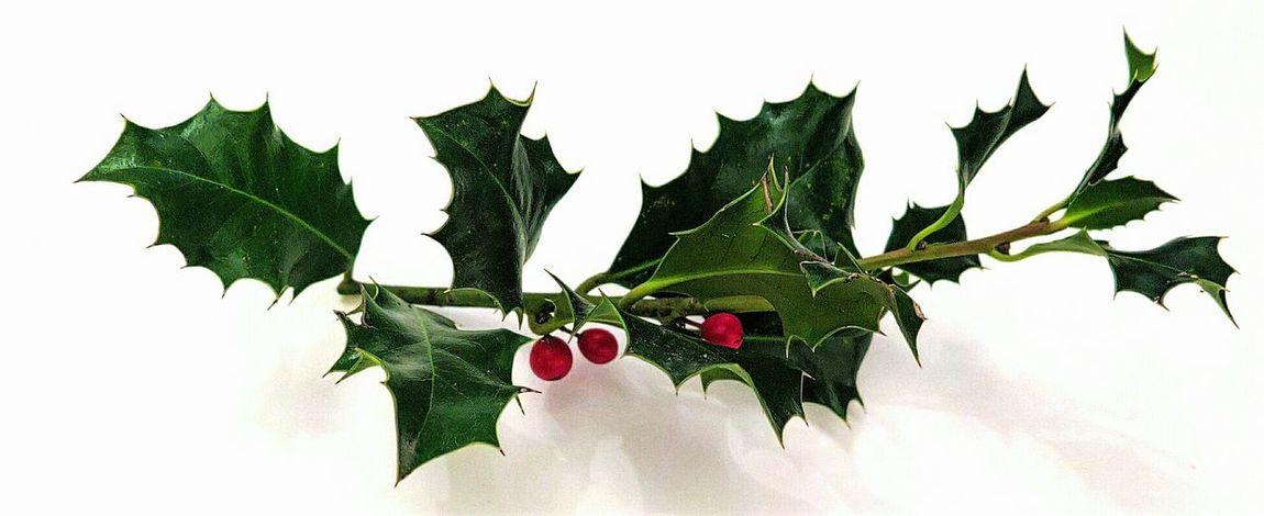 Ladyphotographerofthemonth Showcase: November Berry Learn & Shoot: Simplicity Christmas Decoration Xmas🎄 Home Decoration  Minimalistic Minimalist Photography  EyeEm Best Shots - Minimalist EyeEm Best Shots Minimalism Minimalobsession