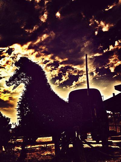 Sun_collection, Sky_collection, Cloudporn, Skyporn Sunset #sun #clouds #skylovers #sky #nature #beautifulinnature #naturalbeauty #photography #landscape Horse Flower#garden#nature#ecuador#santodomingoecuador#eyeEmfollowers#iphoneonly#nofiltrer#macro_garden#pretty#beautiful#followme#sho