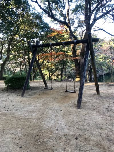 Swingers Wanted Autumnbeauty Autumn Leaves Tree Nature Day No People Tree Trunk Growth Outdoors Beauty In Nature Branch Tranquility Scenics Landscape Sky The Week On EyeEm Omura Nagasaki Japan
