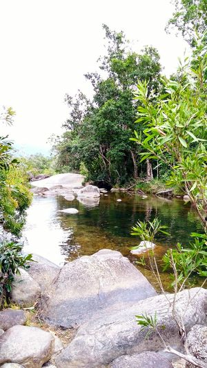 Beauty In Nature Tranquility Outdoors, Outside, Open-air, Air, Fresh, Fresh Air, Close-up Natural Photography Natural Colours Natural Light Water No People Rainforest Australia River Scenics