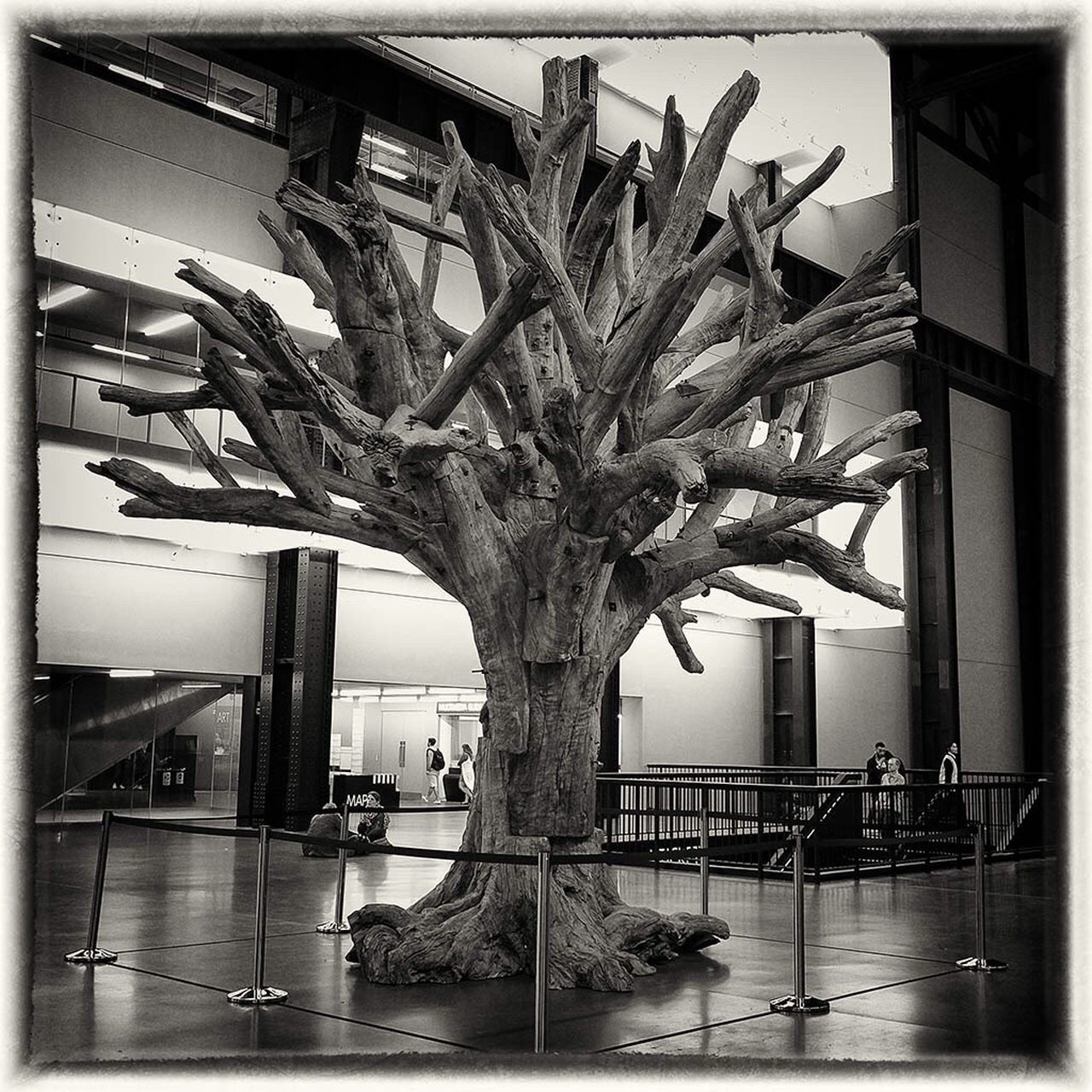 indoors, tree, day, real people, nature, architecture, animal themes, mammal