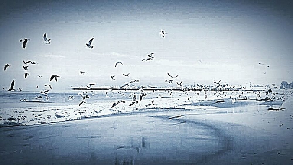 Seagulls And Sea Pacific Ocean Water Ocean Photography Coastal Life Nature Photography This Week On Eyeem Taking Photos My Photography Seagulls, Beach My Point Of View Bird Photography SEAGULL IN FLIGHT Sand Blackandwhite Photography Water Reflections Sand Reflection