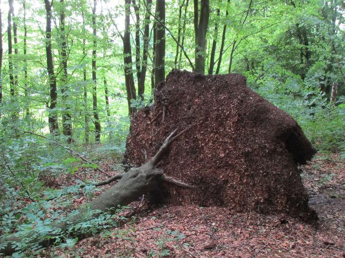 Fallen Tree Day