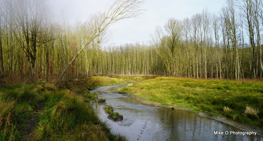 Beauty In Nature Day Forest Grass Landscape Lush - Description Nature No People Non-urban Scene Outdoors Plant Scenics Sky Stream - Flowing Water Tranquil Scene Tranquility Tree Water Wetland