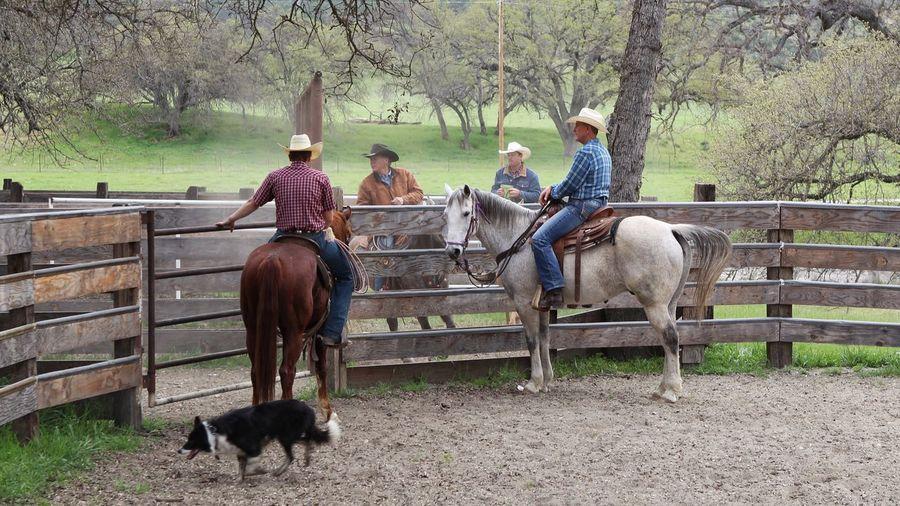 Planning committee.... Horse Togetherness Horseback Riding Lifestyles Rural Scene Tadaa Community Femalephotographerofthemonth EyeEm Gallery EyeEm Best Shots Eye4photography  Ranch Ranch Life