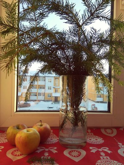 Day холод зима утро яблоки ель ваза First Eyeem Photo