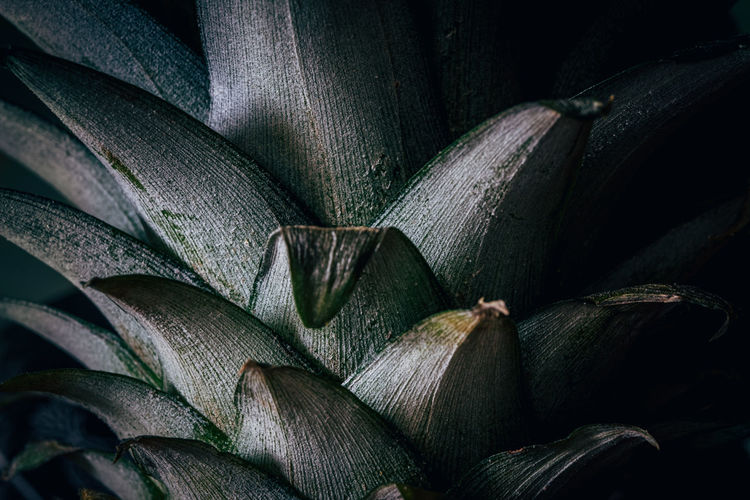 Detail view of pineapple leaves
