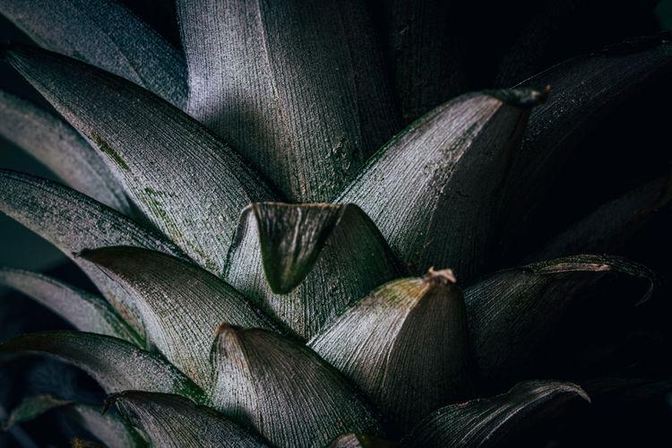Full frame shot of flowering plant