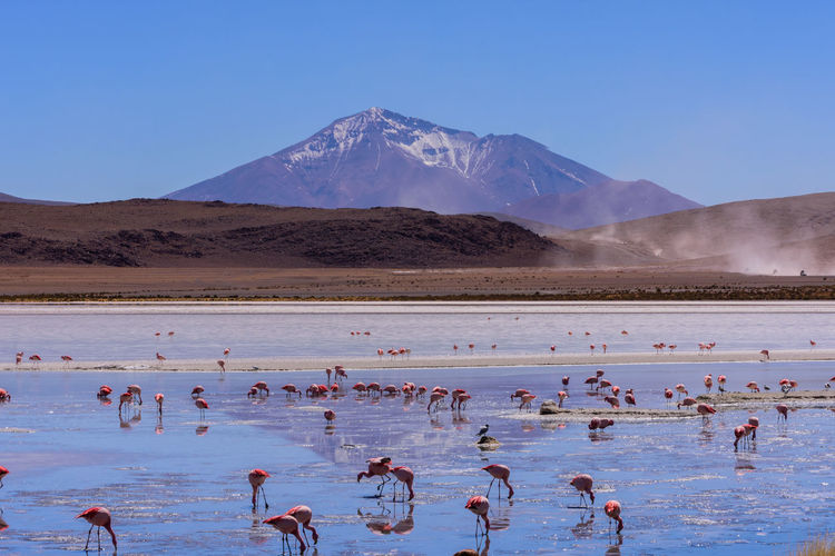 Flock of birds in lake against mountain range