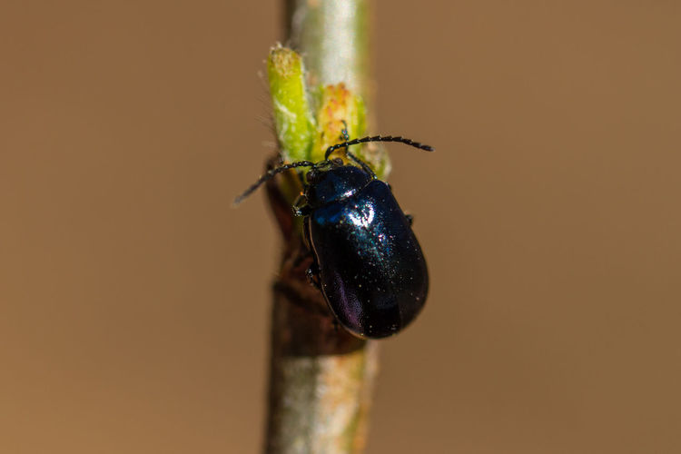 Close-up of beetle on stick