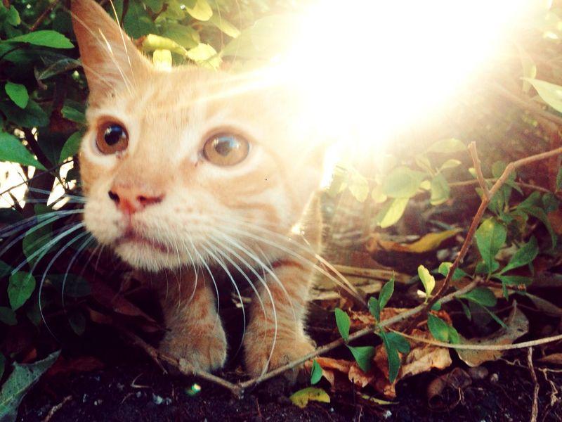 ?????? Cat Kittie