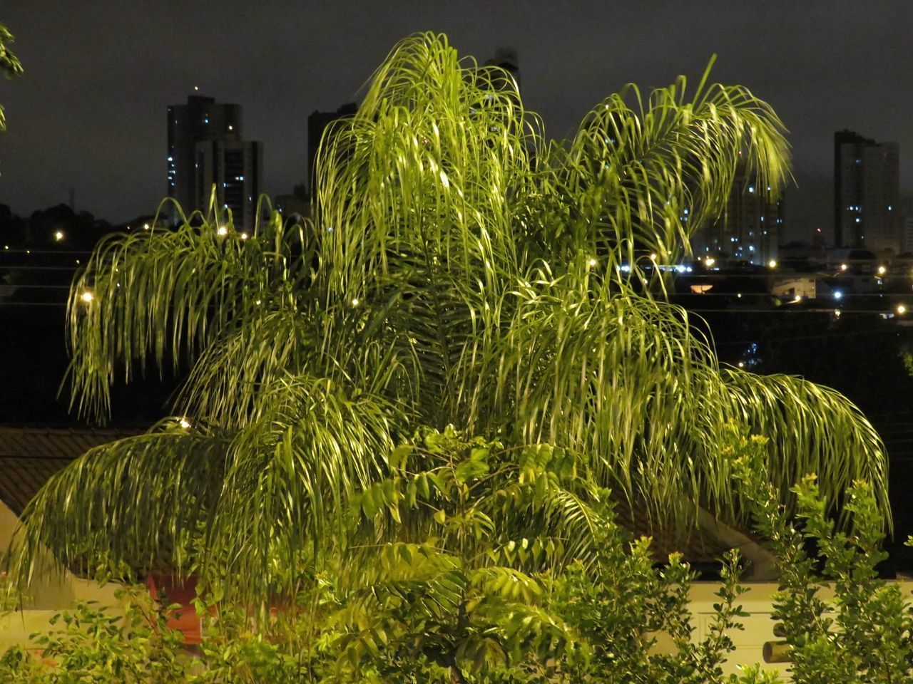 SCENIC VIEW OF TREES AT NIGHT
