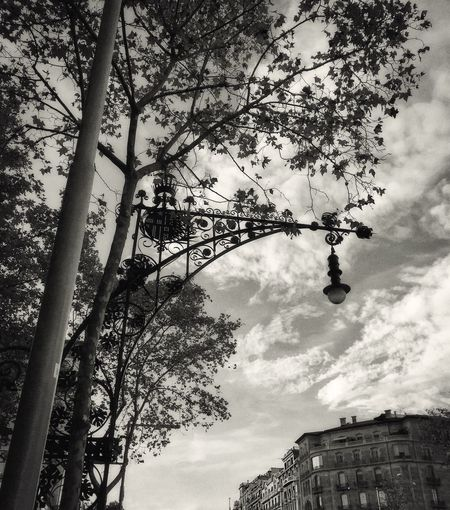 342 / 366 Architecture City Street Cloud - Sky Cloudy Decoration Design Lampost Low Angle View Nature Outdoors Sky Tree Urbanphotography