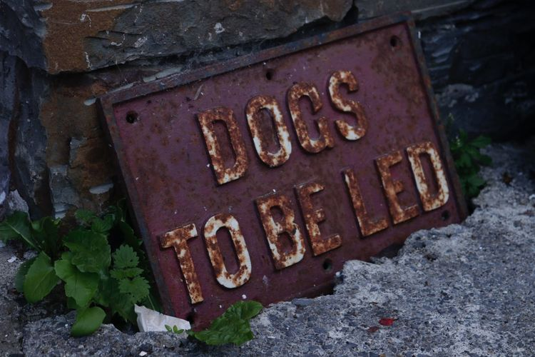 Dog Sign Sign Communication Text No People Metal Western Script Day High Angle View Rusty Old Close-up Architecture Capital Letter Damaged Sign Weathered Decline Nature Selective Focus Deterioration Outdoors