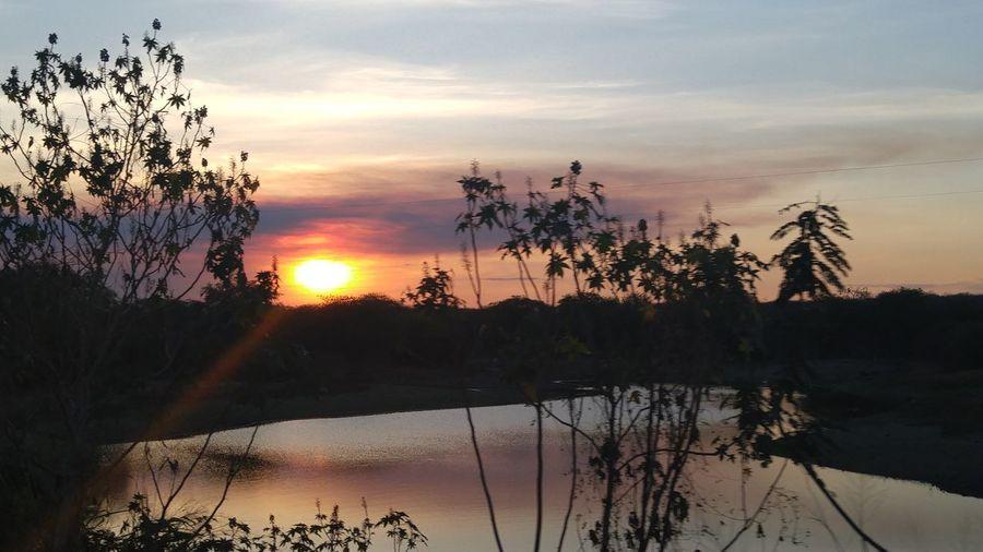 Sunset Water Silhouette Tranquil Scene Scenics Lake Tree Reflection Tranquility Sun Beauty In Nature Orange Color Idyllic Nature Plant Non-urban Scene Sky Branch Majestic Calm