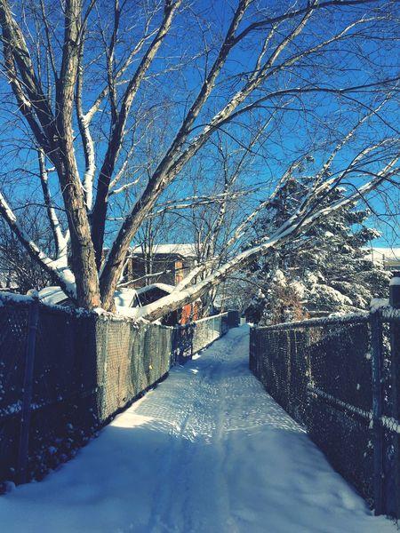 Snow Hello World Taking Photos Canada Winter