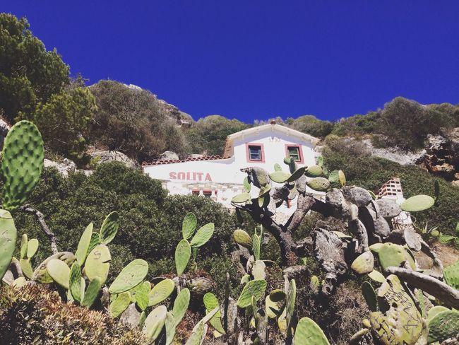 Villa Solita Menorca Arquitectura Menorquina Cales Coves Paisaje Natural Plants And Flowers Cactus