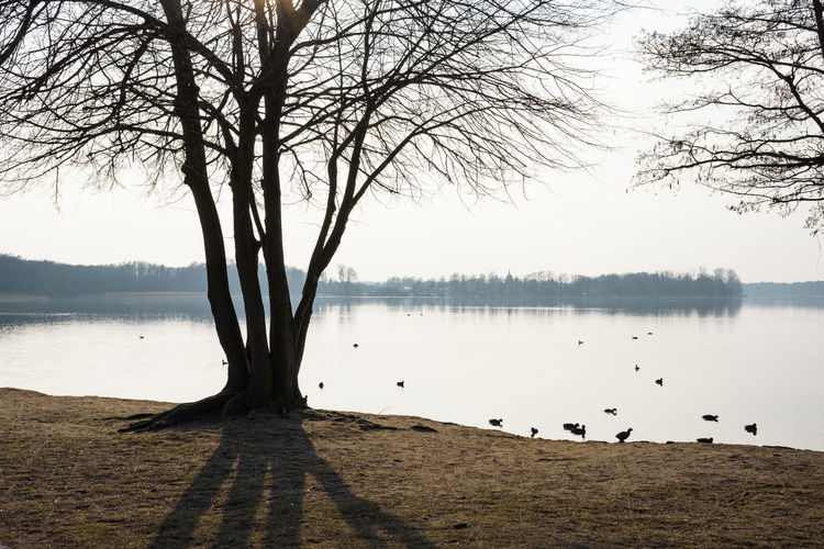 View on Wandlitzsee in Germany Back Light Branches Brandenburg Coots Grass Sunlight Tranquility View Animal Bare Tree Bird Day Forest Germany Lake Nature Plant Sea Shadow Sky Spring Sunset Tree Wandlitzsee Water