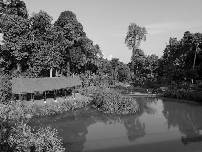 Kampung Day Lake Nature Outdoors Plant Scenics - Nature Tranquility Tree Water