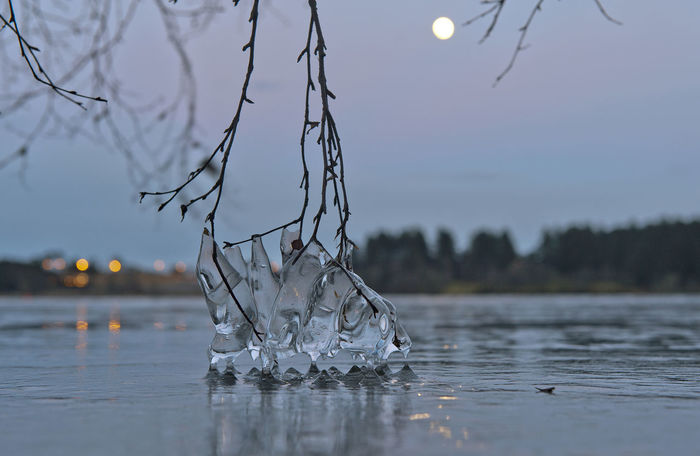 Bokeh Branch Hålandsvatnet Ice Lake Landscape Moon Nature Night Nikon Norge Norway Outdoors Randaberg Rogaland Tree Water Winter Perspectives On Nature Shades Of Winter