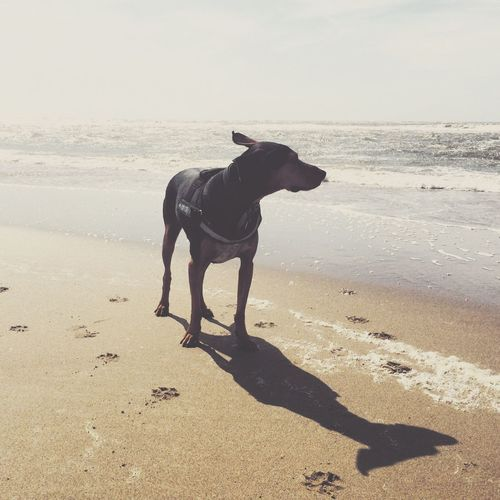 Flatteröhrchen Bono Dog Beach Netherlands The KIOMI Collection Pet Portraits