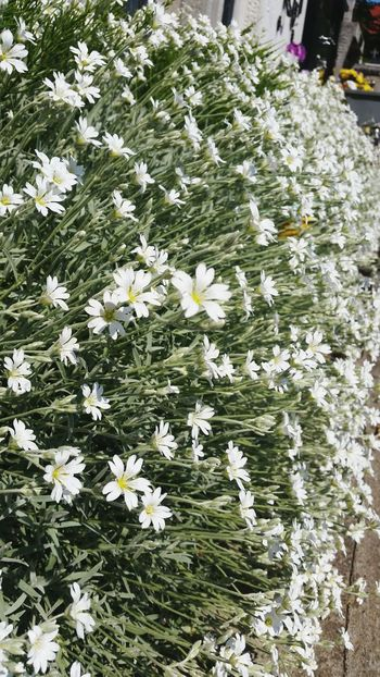 Flower Freshness Fragility Nature Petal Plant Outdoors No People Day Growth Beauty In Nature Flower Head Close-up