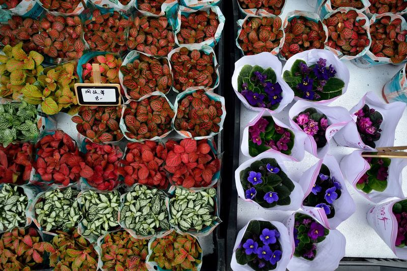 Abundance Flowers For Sale Freshness Large Group Of Objects Market No People Variation