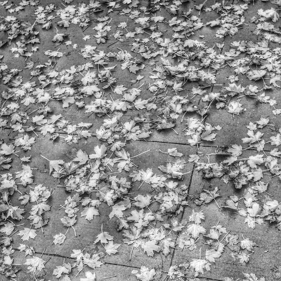 Scattered leaves on a rainy Wednesday Fall Leaves RainyDay Autumn Leafs