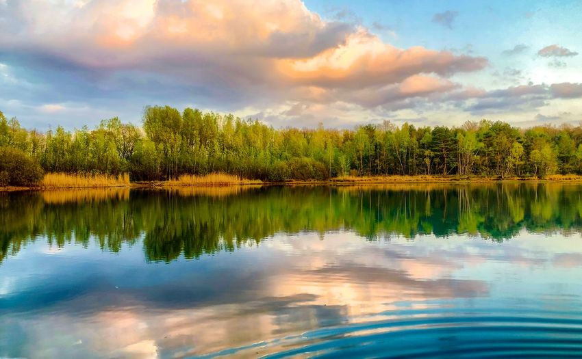 Colorful and dramatic sunrise or sunset landscape showing a lake in the forest with golden lit clouds above and reflected in the water Cloud - Sky Water Sky Plant Tranquility Tree Beauty In Nature Scenics - Nature Reflection Tranquil Scene Lake Green Color Nature Growth No People Waterfront Idyllic Non-urban Scene Day Reflection Lake