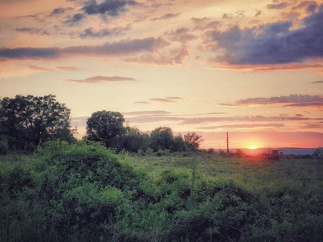 View of a Sunset in the Countryside Plant Sunset Sky Cloud - Sky Beauty In Nature Tranquil Scene Land Scenics - Nature Field Tranquility Environment Tree Growth Nature Landscape No People Orange Color Outdoors