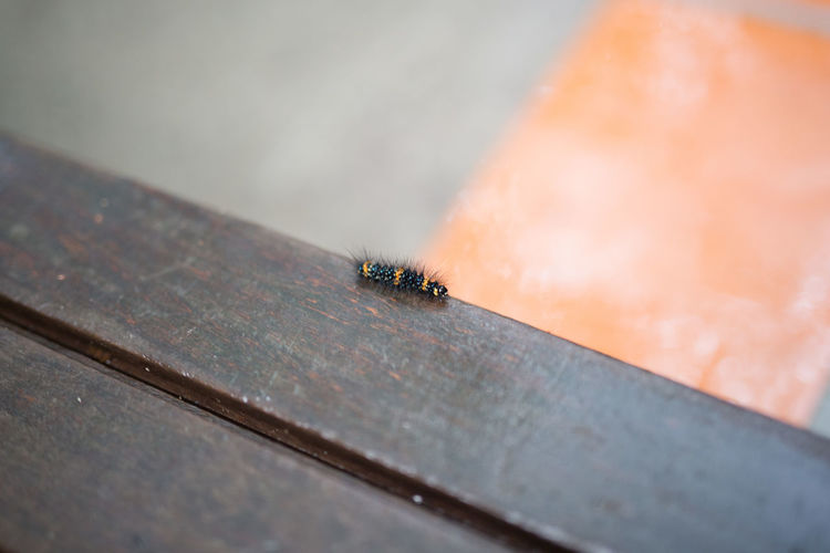 Close-Up Of Insect On Wooden Surface