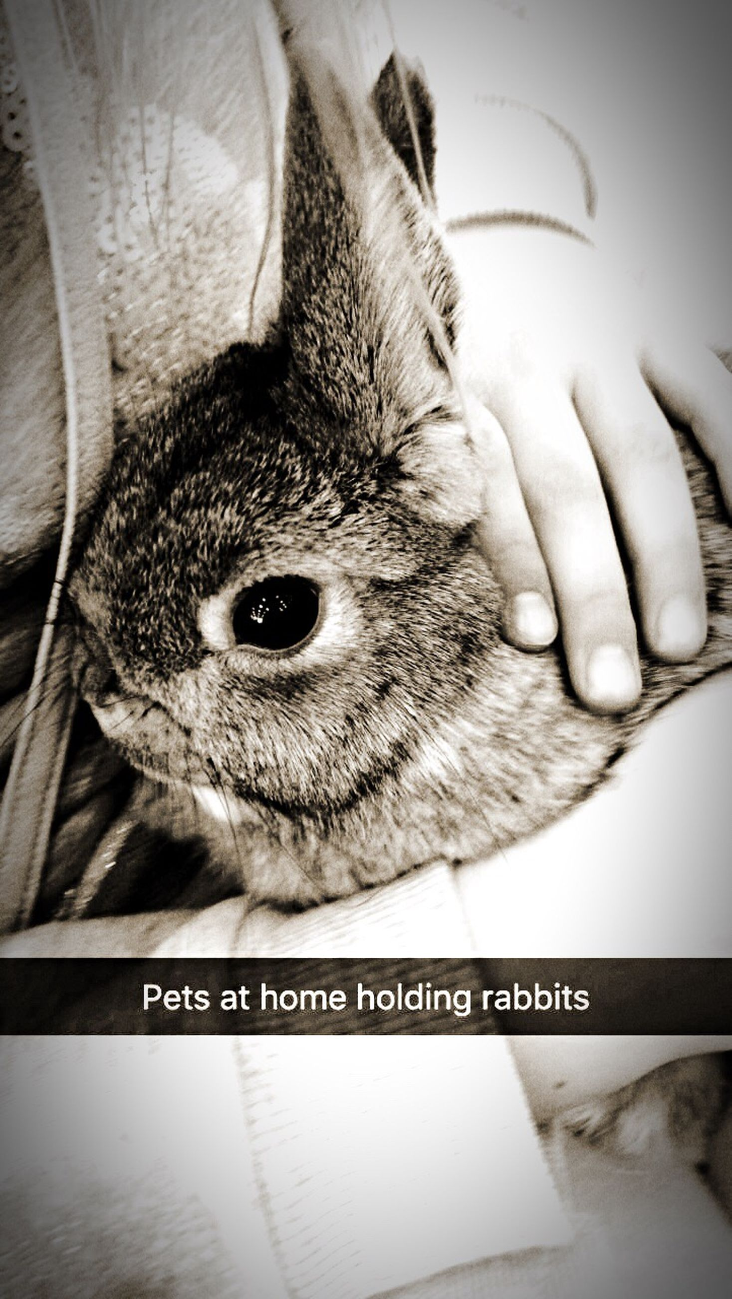 one animal, animal themes, human hand, mammal, pets, indoors, domestic animals, real people, animals in the wild, hamster, human body part, day, close-up, one person, raccoon