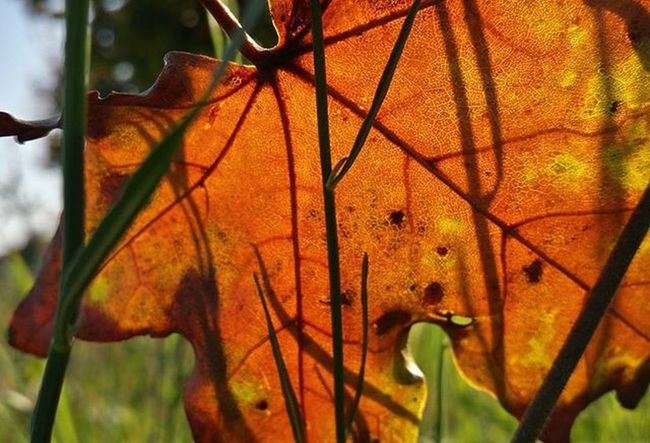 Level ősz Leaves Autumn Naturelovers Naturephotos Naturephoto Naturephotography Természetfotók Természetfoto Természet Koponyeg Magyarfoto Magyarország Magyarfotósok Nofilter Noedit Sunlight Napfeny