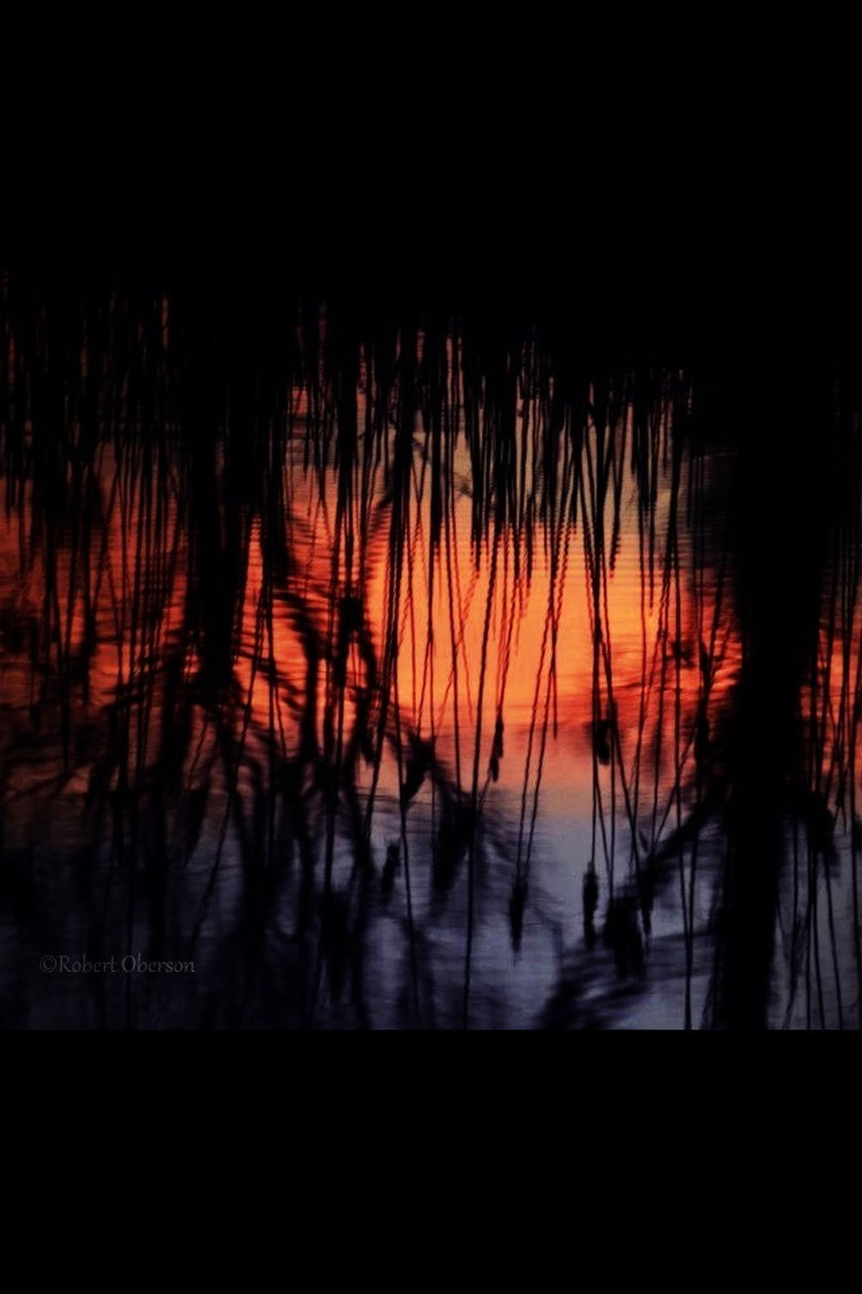 silhouette, sunset, water, reflection, orange color, nature, sea, beauty in nature, dark, tranquility, lake, sky, scenics, tree, animal themes, indoors, dusk, tranquil scene, no people