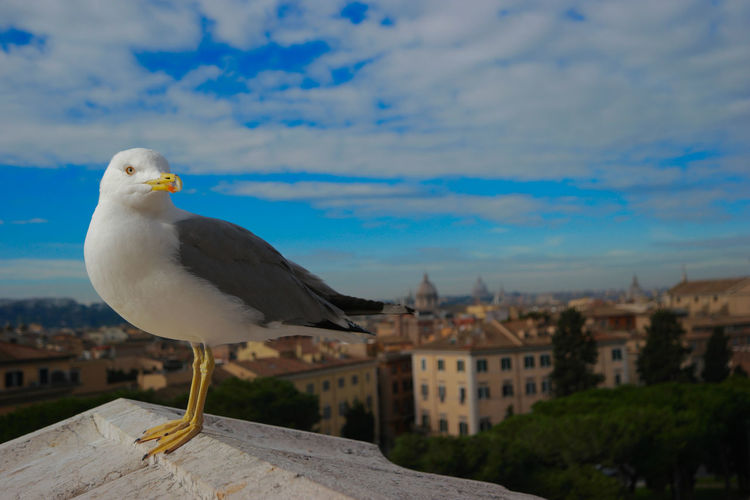 Seagull perching on roof against cityscape