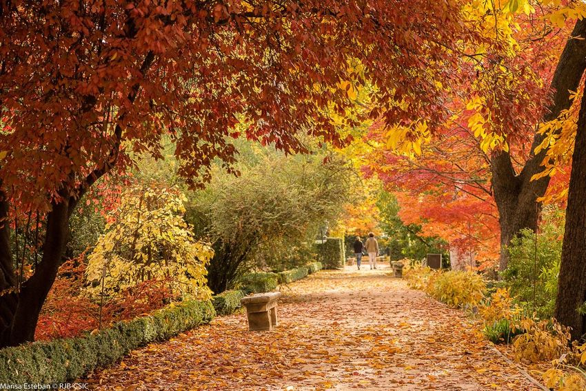 Santander, Spain Autumn Nature Leaf Beauty In Nature The Way Forward Rural Scene Special Autumn Tree Area Tranquility Beauty In Nature Fragility Love The Nature Nature Is Life. Time To Relax No People Power Of Nature