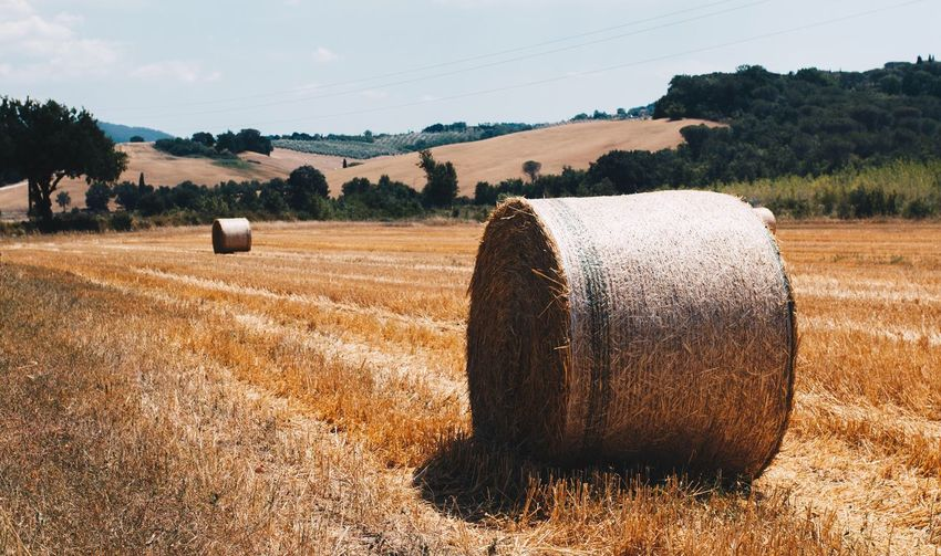 EyeEm Selects Bale  Field Agriculture Hay Bale Hay Rural Scene Tranquility Landscape Tranquil Scene Nature Tree Sky No People Beauty In Nature Day Outdoors Toscana Tuscany Tuscany Countryside Italy Real People Vacations