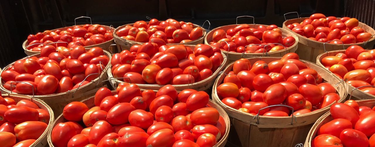 EyeEm Selects Red Tomato Basket Vegetable Abundance Food Large Group Of Objects No People Food And Drink Healthy Eating Freshness Indoors  Day Close-up a truck bed full of tomatoes 🍅 in Gloucester Massachusetts 🇺🇸 The Week On EyeEm
