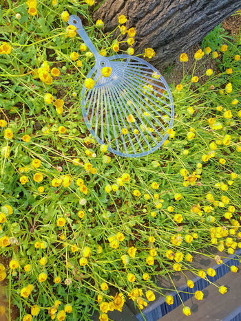Hot Summer Views Beauty In Nature Close-up Day Fan Flower Folding Fan Fragility Freshness Green Color Growth Nature No People Outdoors Summer Yellow