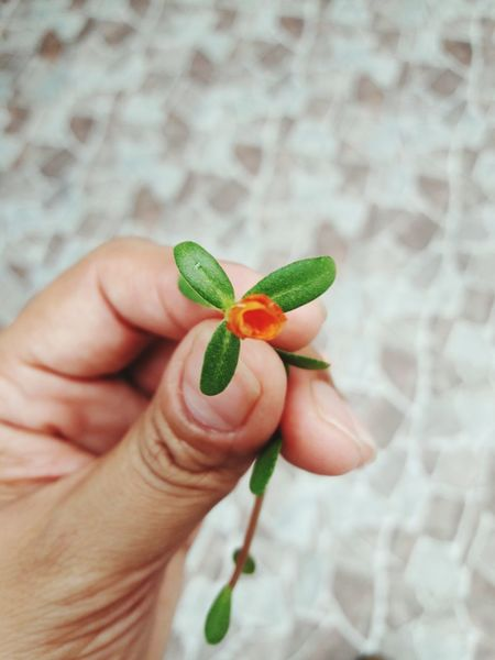 EyeEm Selects Human Hand Holding Close-up Nature Flower Freshness Tiny Flower Perfect EyeEm Nature Lover Beauty In Nature Flower Collection Nature Photography Nature_collection Taking Photos