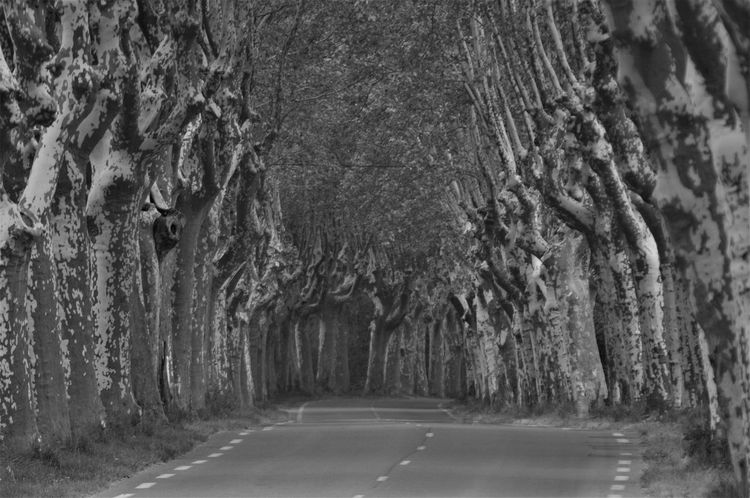France Black And White Day No People Plantane Road The Way Forward Trees Alley