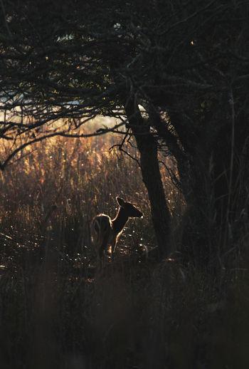 Deer silhouette inside wood circle
